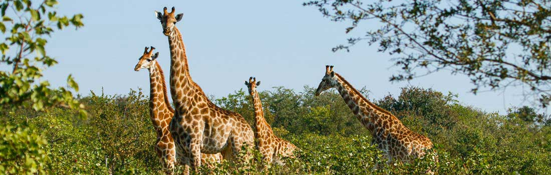 Kruger Park Accommodation & Safaris